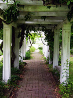 A brick pathway going under a series of arches covered with grape vines.