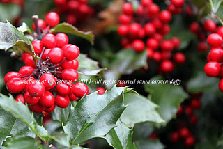 A closeup shot of a holly bush with red berries and green leaves.